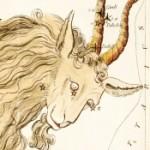 Profile picture of Caribouadi